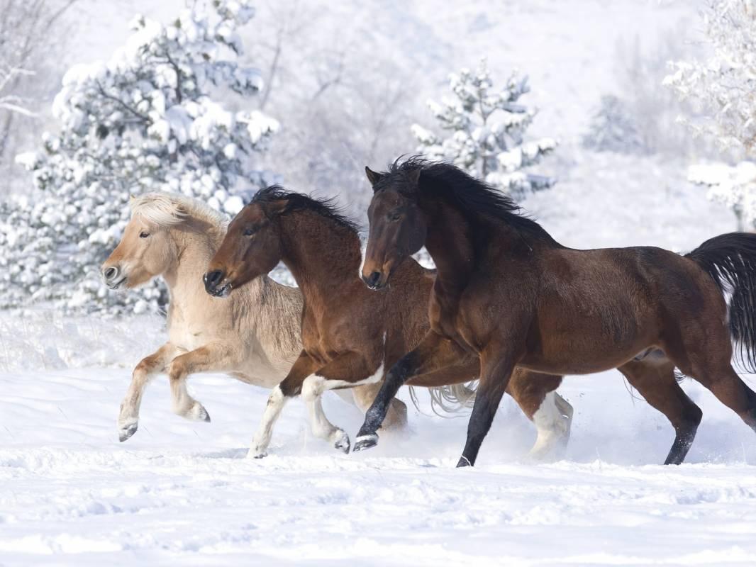 Приглашение об объединении во Всемирную базу любителей лошадей в программу мини БРИК